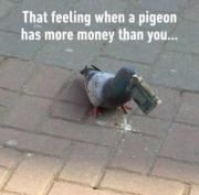 That feeling when a pigeon has more money than you…