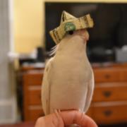 Dollar Hat