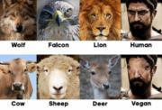 Carnivores vs herbivores