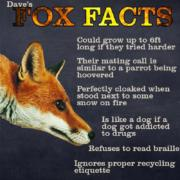 Fox Facts