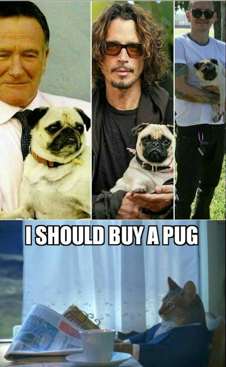 I should buy a pug