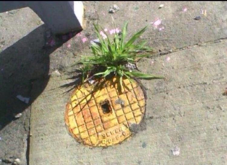 Who lives in a pineapple under the street