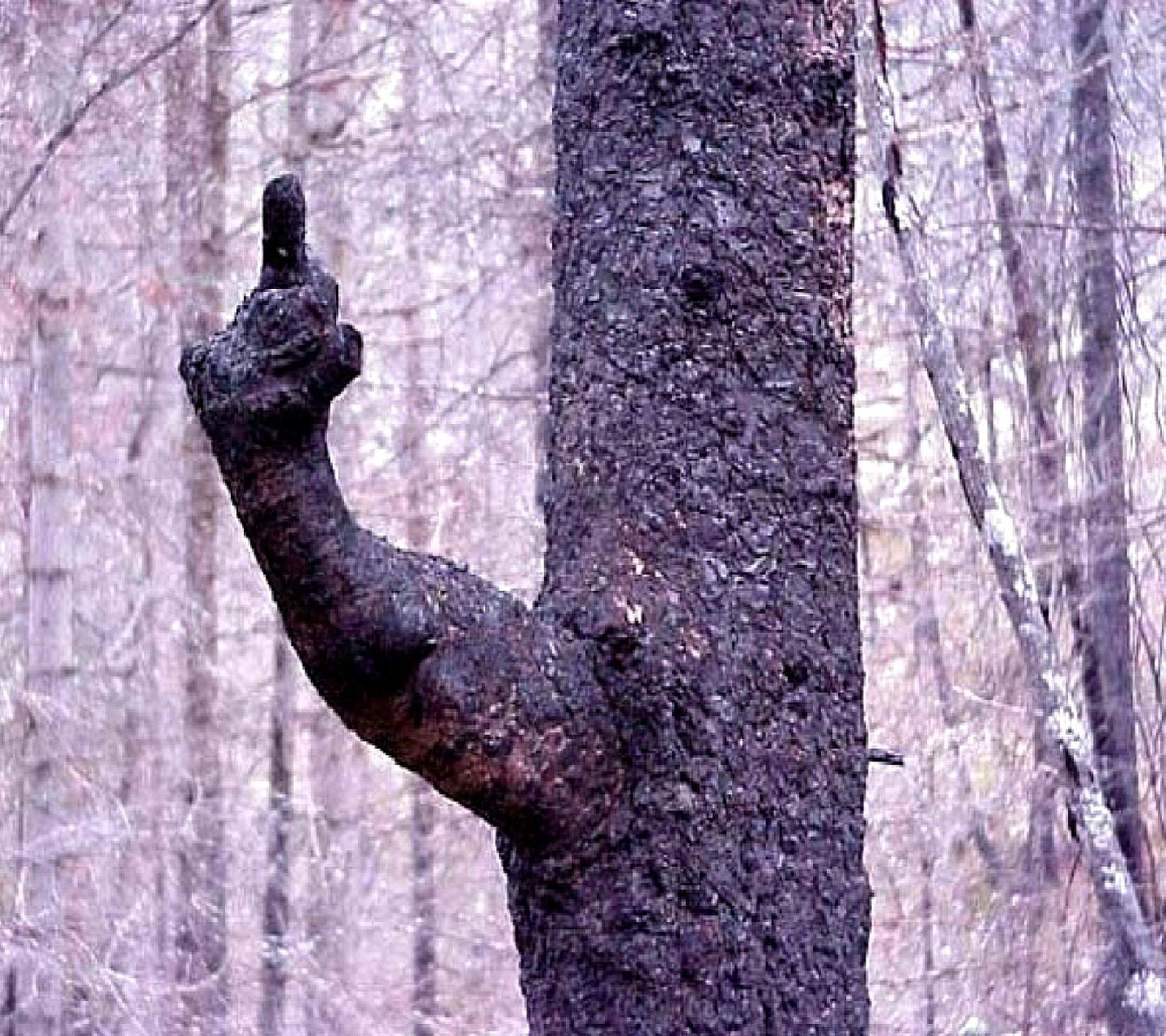 Fuck you too, tree!