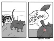 How your cat salutes you every morning