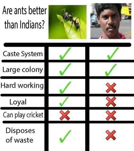 Are ants better than Indians?