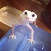 Happy gecko is happy