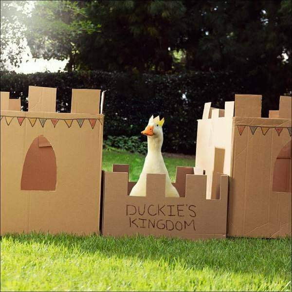 Lord of the ducks