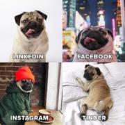 Social media pug