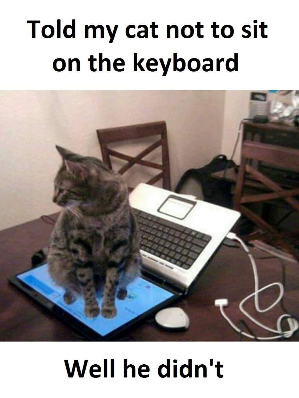Told my cat not to sit on the keyboard…