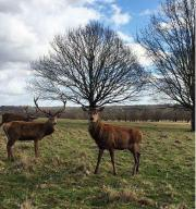 Top marks to the deer on the right for a magnificent set of antlers