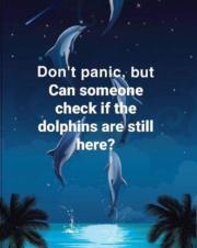 Don't panic, but can someone check if the dolphins are still here