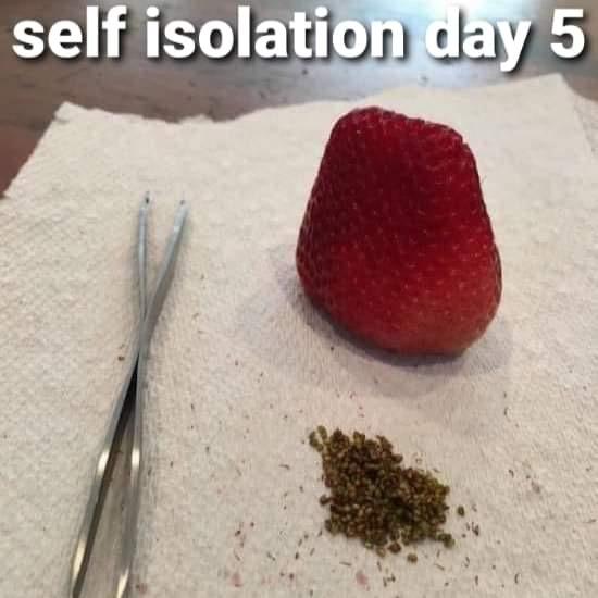 Self isolation day 5
