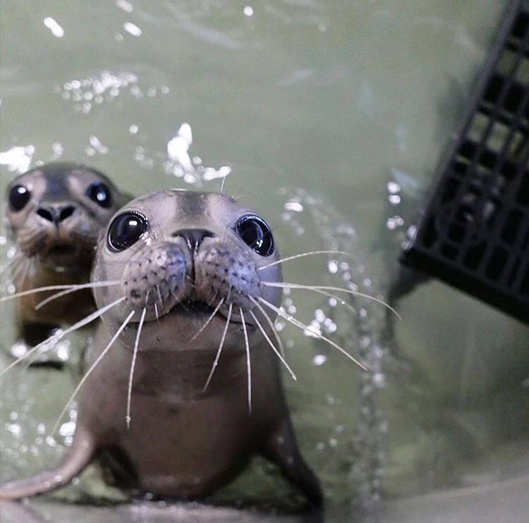 Baby sea doggo