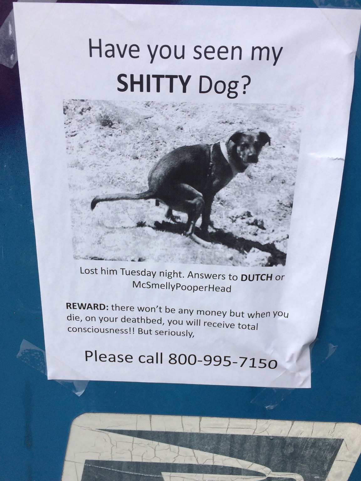 Have you seen my shitty dog?