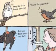 What are birds singing about pandemic