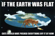 If the Earth was flat, cats would have pushed everything off it by now