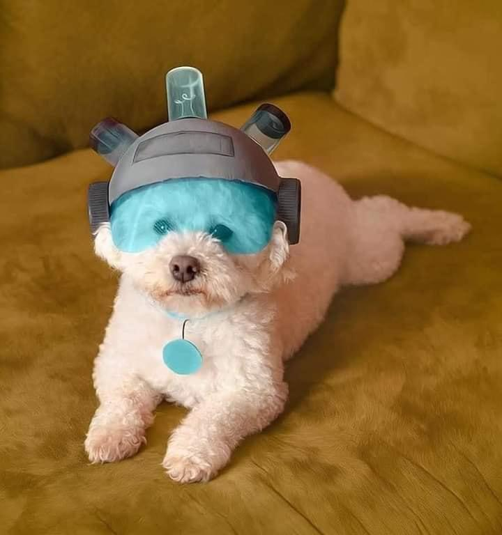 Where are my testicles, Summer?