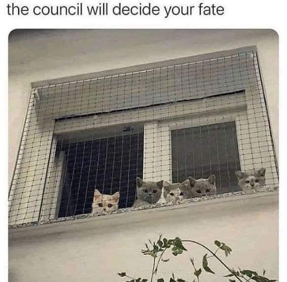The council will decide your fate