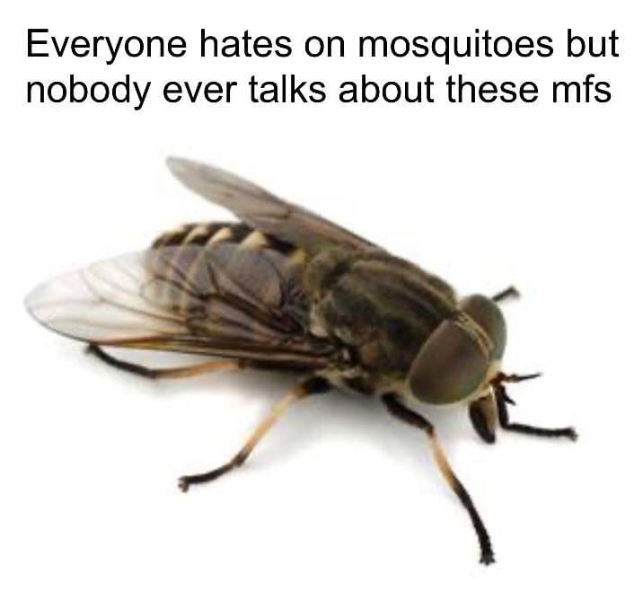 Everyone hates on mosquitoes but nobody ever talks about these mfs