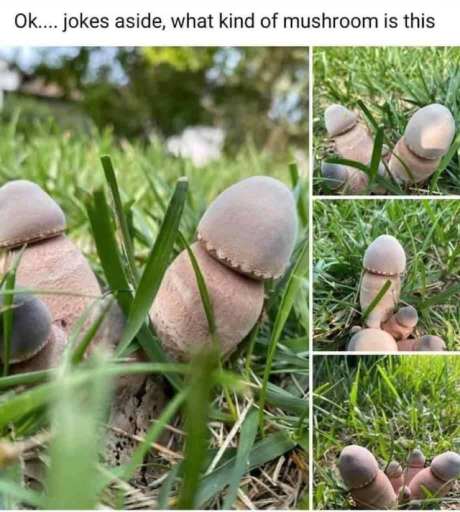 Penis kind of mushroom