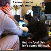 Divorce is tough, but my food dish isn't gonna fill itself