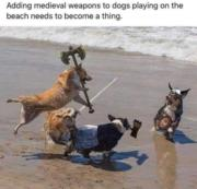 Medieval weapons to dogs playing on the beach