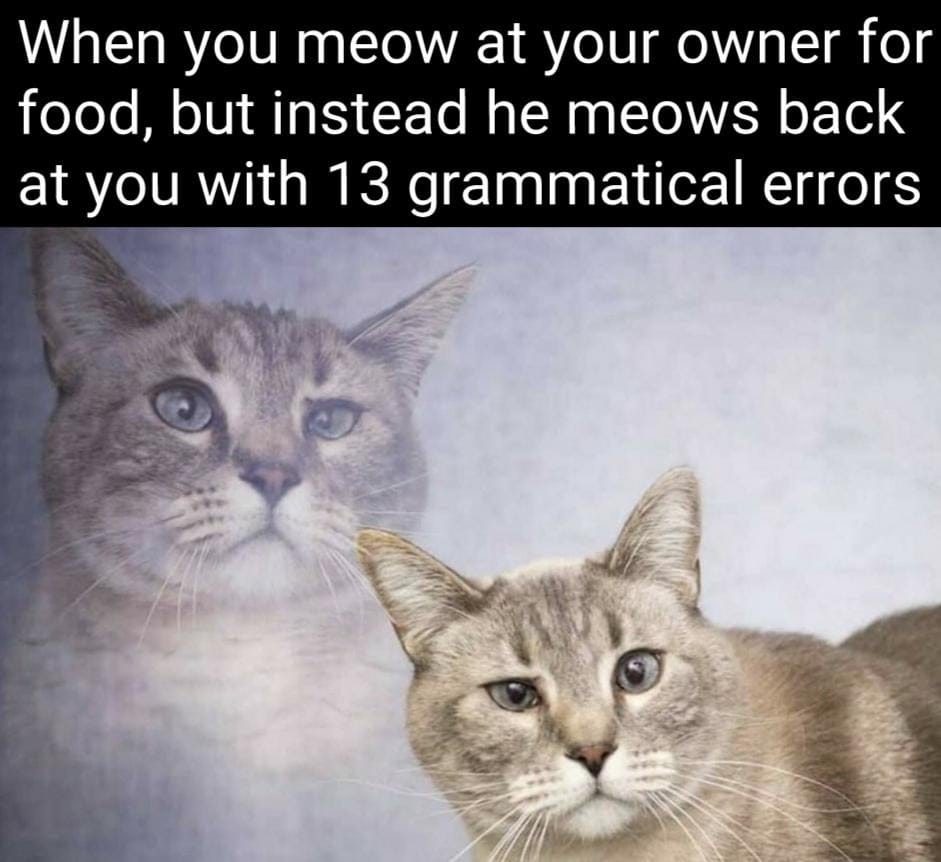 When you meow at your owner for food