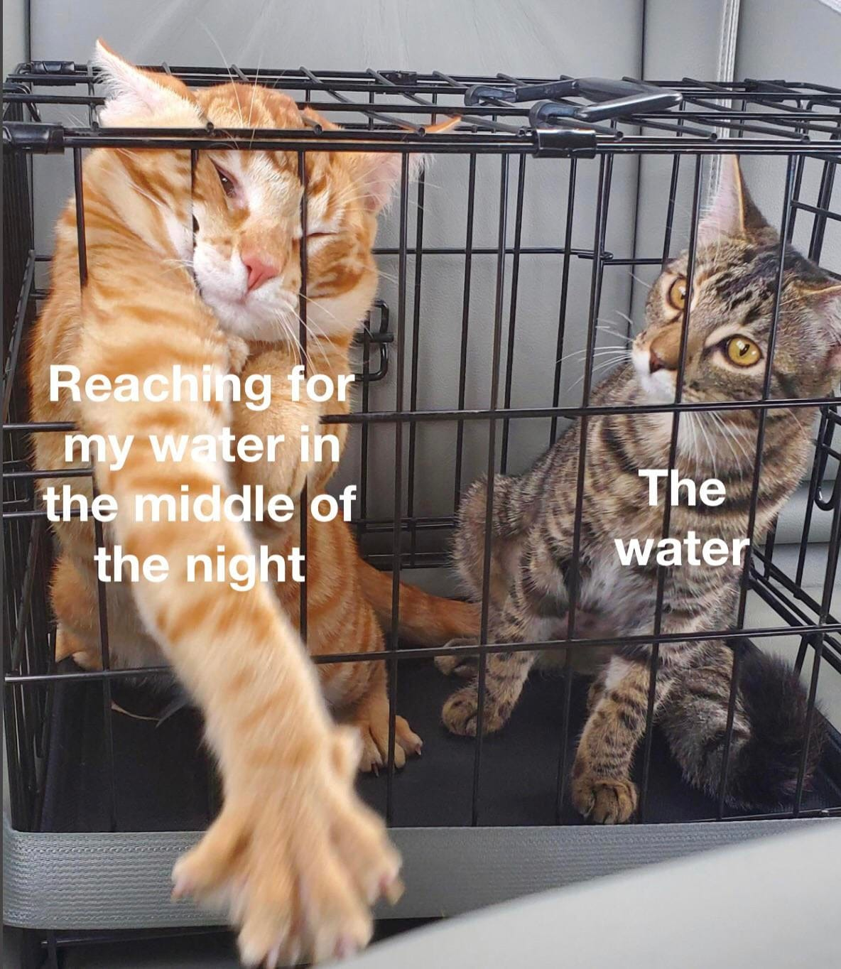 Reaching for my water in the middle of the night