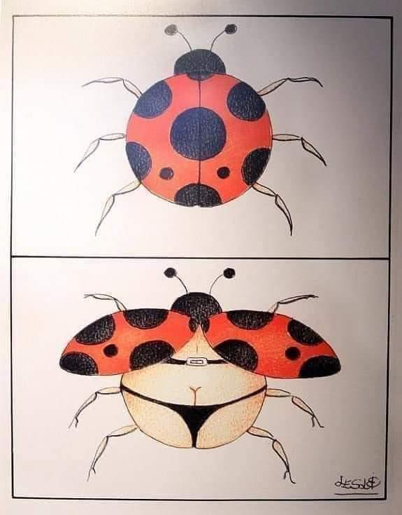 Ladybug in bikini