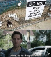 Do not feed or molest the ducks