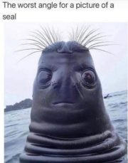 The worst angle for a picture of a seal