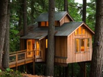Adults Who Live In Treehouses