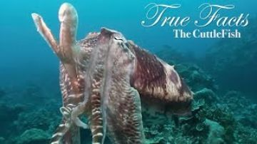 True Facts About The CuttleFish
